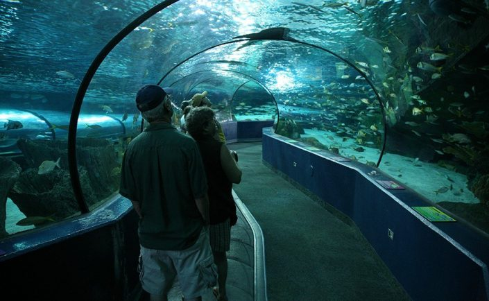 Ripley's Aquarium Tunnel