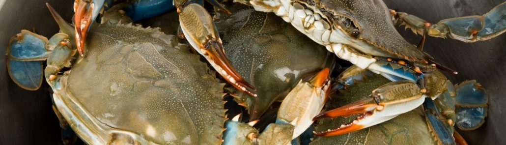 Blue Crab Bucket - Image Provided by VisitMyrtleBeach.com